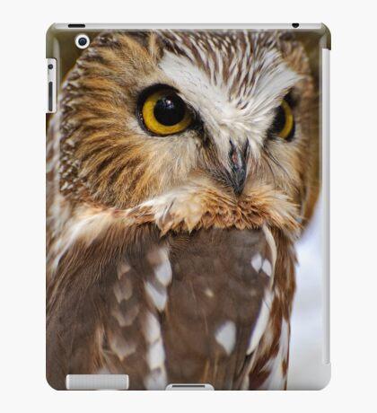Saw Whet Owl - Amherst Island, Ontario iPad Case/Skin
