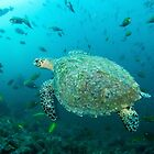 Turtle at fish rock cave von Stephen Colquitt