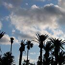 Palms by Chanzz