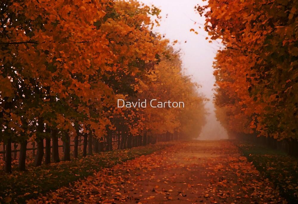 Misty Autumn morning, Gloucestershire, UK by David Carton