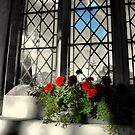 flowers in the window by savosave