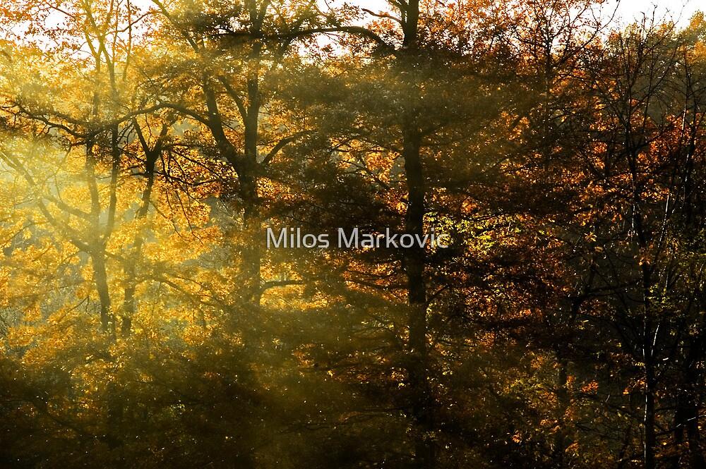 Luminance by Milos Markovic