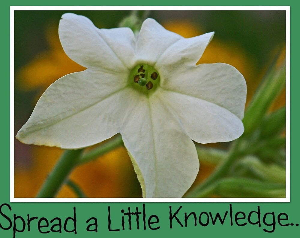 Knowledge by lynell