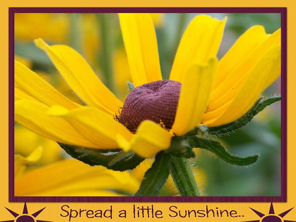Sunshine by lynell