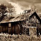 Sepia Barn by Debra Fedchin