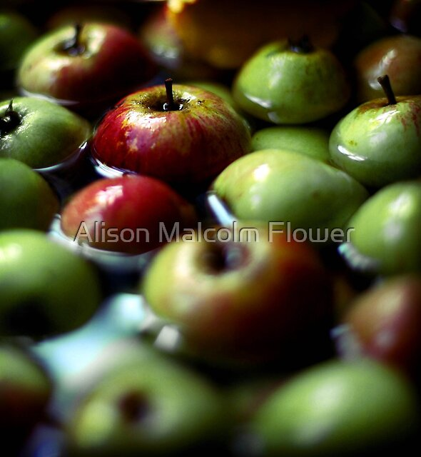 Windfalls by Alison Malcolm Flower