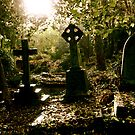 Tombstones in Highgate Cemetery (West) by Richard Pitman