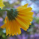 Count it All Joy by Lozzar Flowers & Art