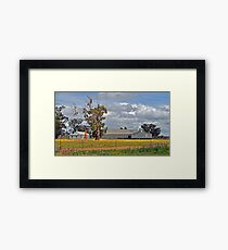 Tubbo Station Shearing Shed Framed Print