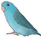 Pacific parrotlet by lobitos