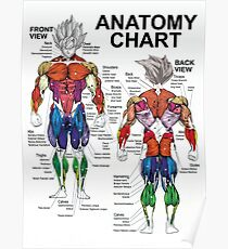 Anatomy Chart - Muscle Diagram - Anime Workout Inspirational Poster