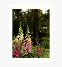 Foxgloves in Cottage Garden Art Print