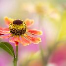 Summer  by Mandy Disher