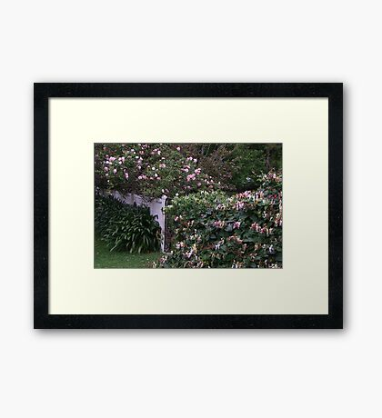 A Gate Covered in Honeysuckle and Roses! Framed Print