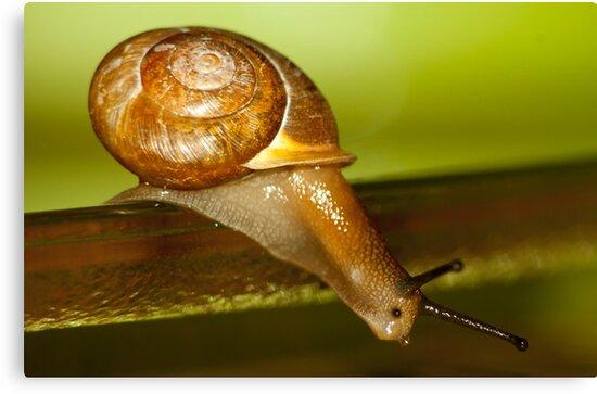Snail Jump! by vasu