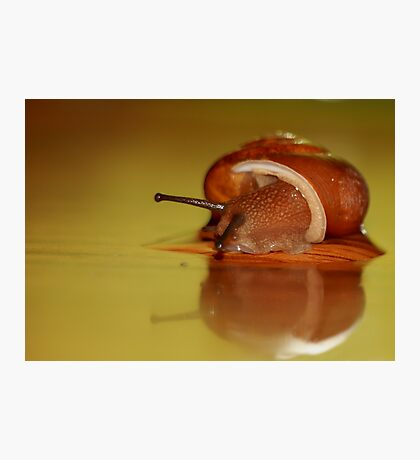 Snail peeping out! Photographic Print