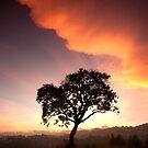 One Tree Hill by Vikram Franklin