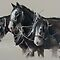 Everything Draft Horse & Carriage Driving