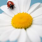 Lady Bird by OldaSimek