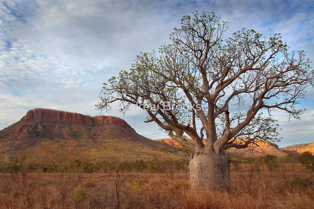 Boab Tree, Gibb River Road, Western Australia, 10 Oct 2010 by Andrew Brooks