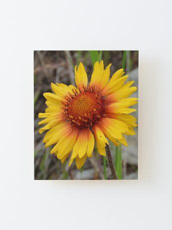 Blanket Flower Wood Mounted Print