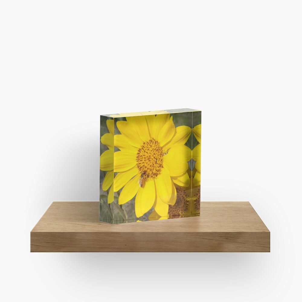Peek-a-boo spider Acrylic Block