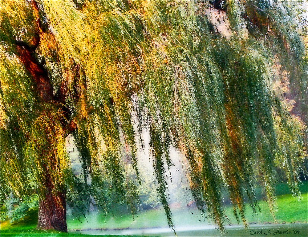 Weeping Willow Tree Daydreams by Carol F. Austin