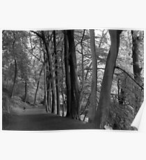 Valley of Trees Poster