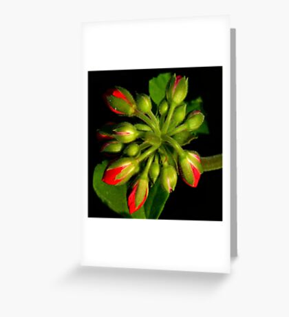 The World Is A Colorful Wonder ~ Part Sixteen Greeting Card