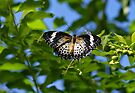 Butterfly and Blue Sky by Sandy Keeton