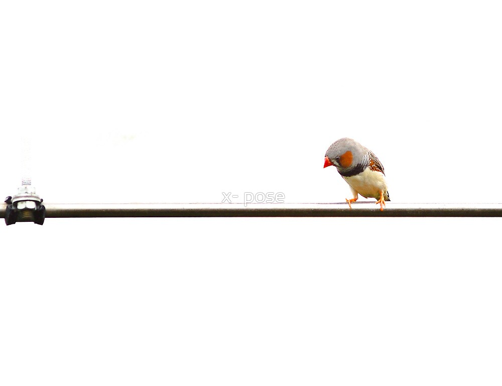 Bird on a wire :-)) by x- pose
