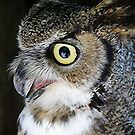 Owl Eyes by © Loree McComb