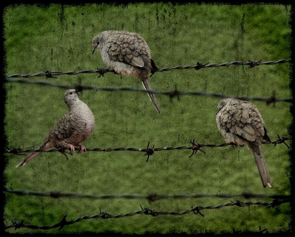 Pájaros en el alambre by vanessalamas