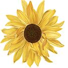 Sunflower Sticker by ArtByMichelleT