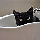 Peek-A-Boo! by Ainsley Kellar Creations
