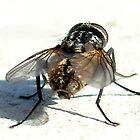 So Fly I by Cameron Hampton