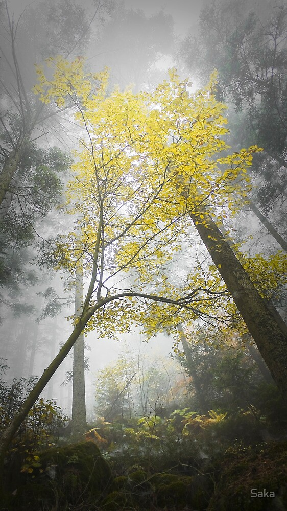 Foggy Forest by Saka