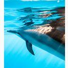 Dolphin by Kana Photography