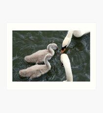 White swans and cygnets Art Print
