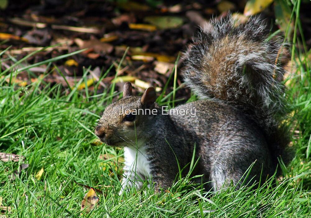 Grey squirrel at Kew Gardens by Joanne Emery