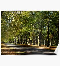 Lime Tree Avenue Poster