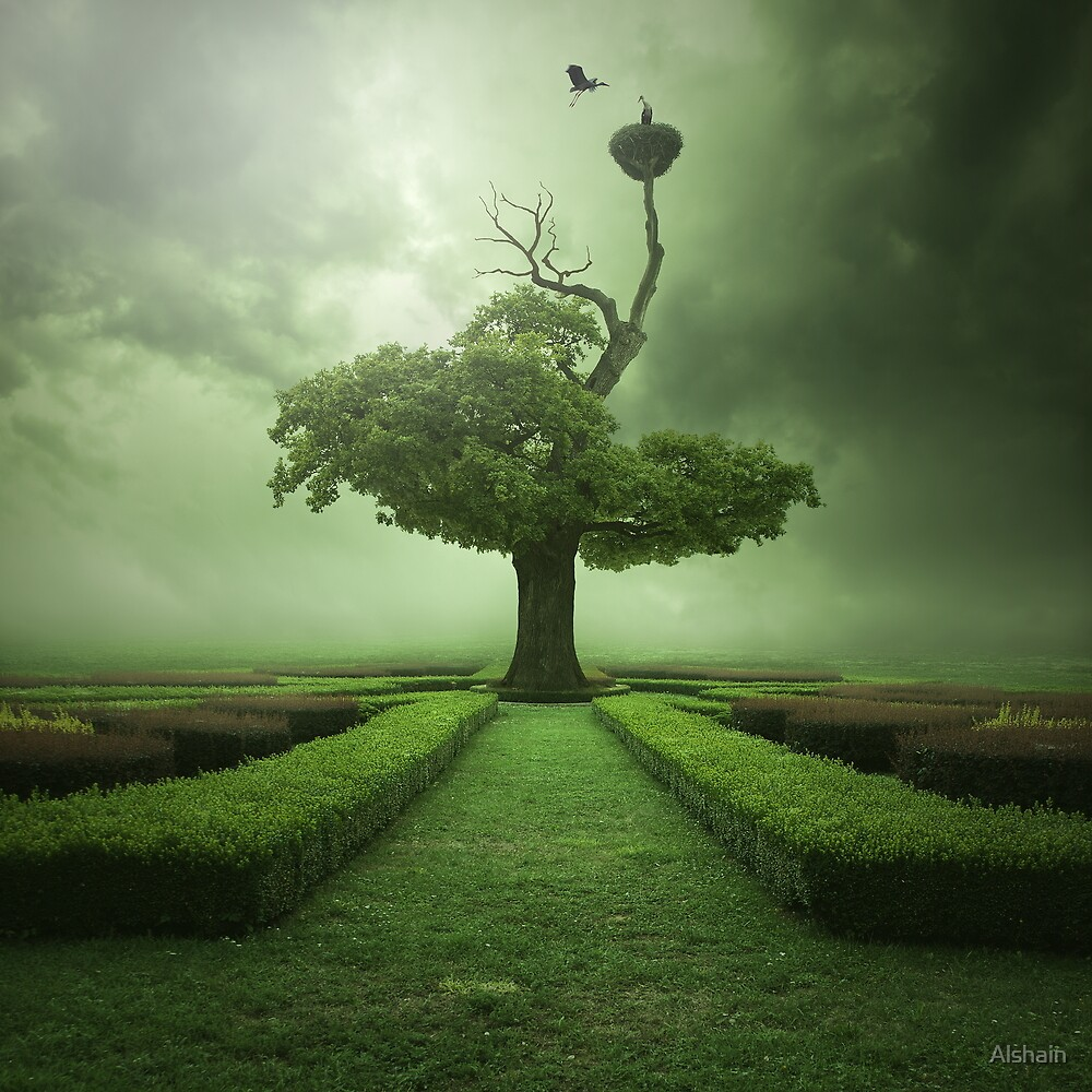 Oak by Alshain