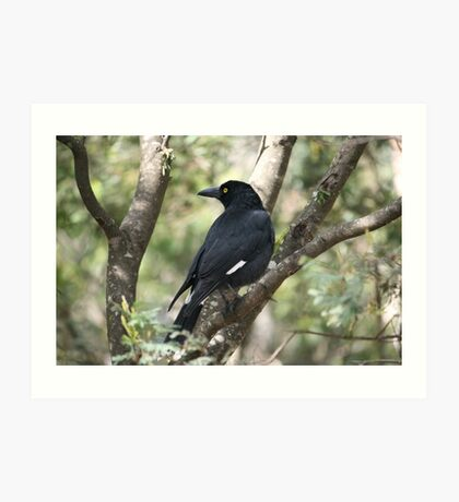 Currawong in the Bush Art Print