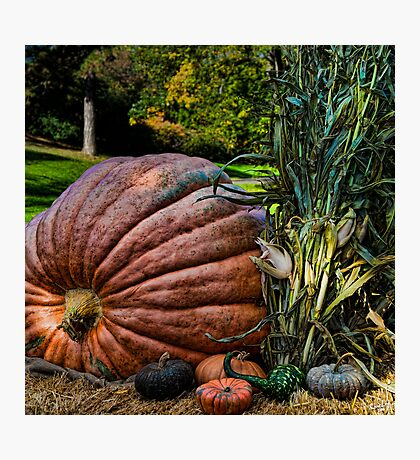 Heck! It Must Be October Again Photographic Print
