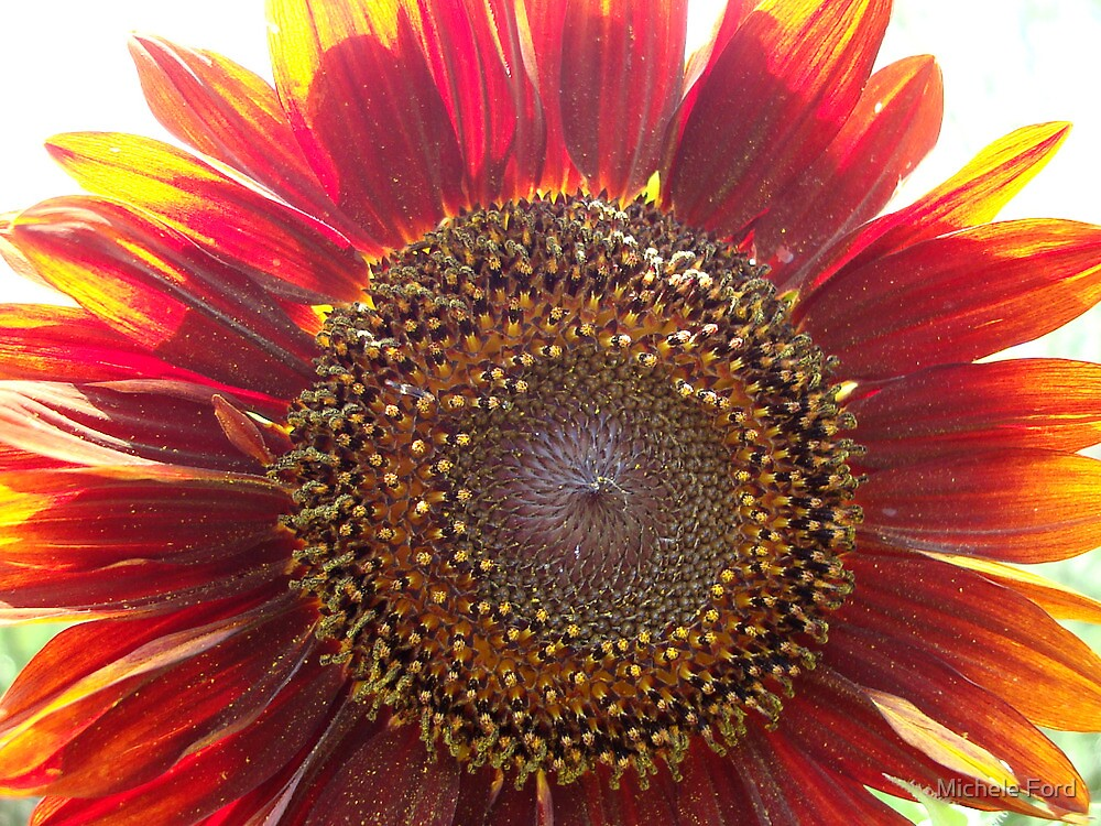 In My Garden (Red Sunflower) by Michele Ford