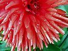 Wet Petals by sstarlightss
