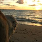 Fijian Dog by Natalie Broome