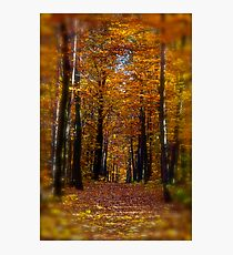 ♥ ♥ ♥ ♥ series. Autumn Leaves (Les Feuilles Mortes).Memories of those happy times when we were all together. Brown Sugar Storybook.  Favorites: 13 Views: 1742 . Thanks! Photographic Print