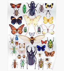 Insect collection Poster