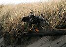 Driftwood by Dave Davis